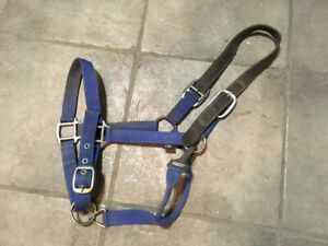Blue Halter with Leather Breakaway