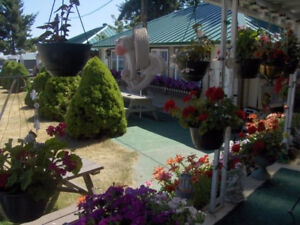 Cabin for rent in Qualicum Bay utilities included