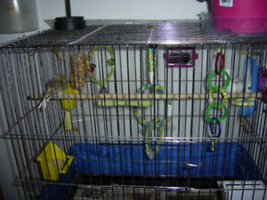 two canaries and cage