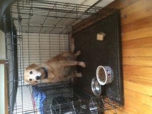 """Sherb! GRANDES CAGES à chiens à vendre ! 20""""/30""""/42"""" 80$ NÉGO!"""