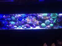 125 gallon reef tank content for sale