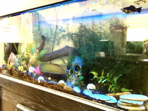 31 Gallon fish tank with stand
