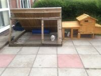 Rabbit hutch + rabbits