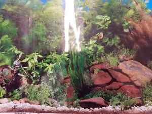 Assorted fish and lizard tank liners