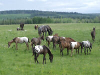 Investor required by long established horse breeding business