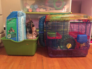 2 month old hamster cage and accessories