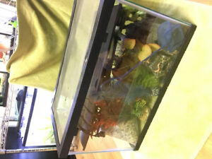 Fish stuff, cracked tank with lid, balloon molly