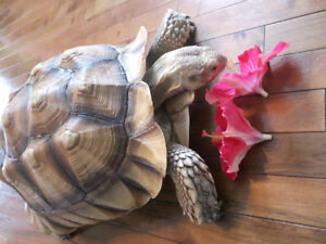 Tortoise collection for sale