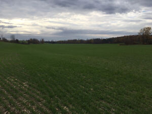 141.5 acres at Teeswater