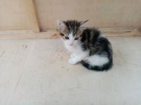Georgous kittens