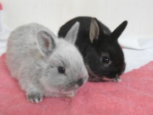 ADORABLE BABY BUNNIES ! ****READY FEB. 1 7****