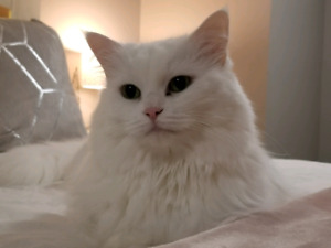 Beautiful Cat looking for forever home