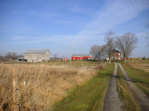 Farm for Sale by Auction Kawartha Lakes Peterborough Area image 2