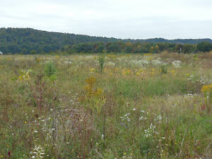 """Grimsby  - 10 Acre Lot for Rent """"Organic"""""""