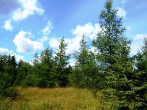 77 acres of farm/recreational land on hwy 11 east of Moonbeam