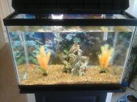 20 gallon fish tank with fish