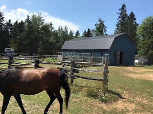 HOBBY FARM WITH BARN,HORSE PADDOCKS ON 45 ACRES!!!