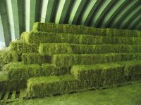 Hay for sale 1st cut grass mix