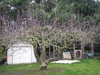 Fruit Tree Pruning *The Frog's Friend* Gardener