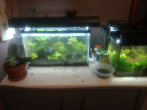 Two planted fish tanks for sale.