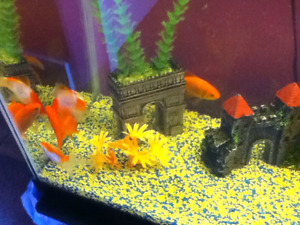 40 gallon fish tank + fish