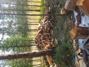 Split  seasoned Larch and fir fire wood