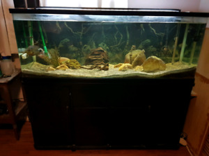 100 gallon curved aquarium setup