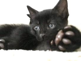 kittens males