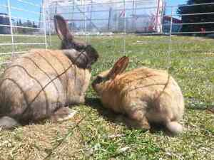 Bunnies for sale and rabbits!!! :D