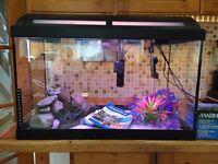 Marina 60ltr fish tank