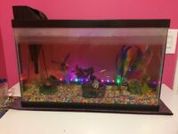 Fish tank with lights, filter, and 5 fish