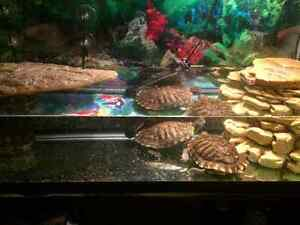 Aquarium for sale. Turtles for sale