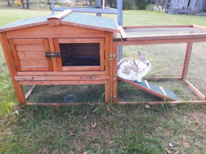 Friendly Male rabbit with indoor and outdoor pen
