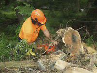 Labourer with Chainsaw Experience