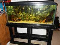 50 Gallon Hagen Aquarium Loaded With Accessories Only $290