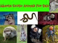 New Facebook group for exotic animals