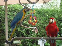 SCARLET AND BLUE AND GOLD MACAWS WITH CAGE AND ACCESSORIES
