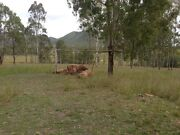REDUCED!!! 10 Acres 25 mins from Gympie Woolooga Gympie Area Preview