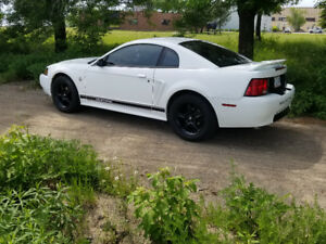 Mustang For Sale - Excellent Condition