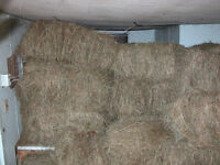 Hay for sale, Horse quality, small square bales, no rain.