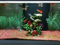 FISH TANK AND FISH FOR SALE !!