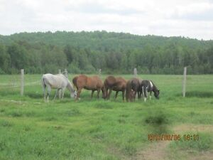 WANTED: Volunteers to work with horses + livestock