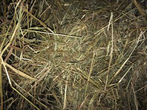 Large Square Bales of First and second cut Hay