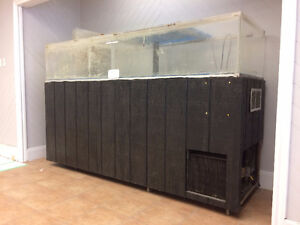 LOBSTER & FISH TANK, COOLER FOR WORMS Kitchener / Waterloo Kitchener Area image 1