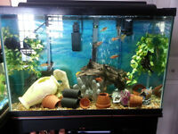 45 Gallon Tall Aquarium system w/ stand and some fish