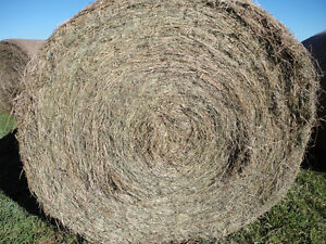 GREAT HORSE HAY 1ST and 2ND CUT,NO RAIN, Can deliver