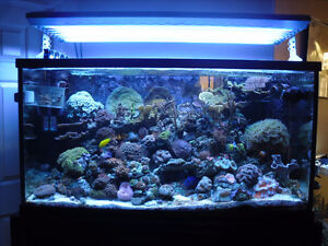 T5 Light System (size 36) - Saltwater Fish or Fresh water