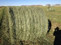 Premium quality 2nd cut hay for sale!!