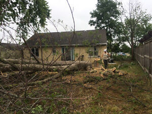 Tree REMOVAL-TREE Triming/Pruning>FALL SPECIAL...... Kitchener / Waterloo Kitchener Area image 6