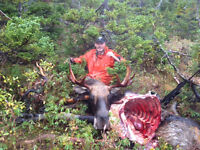 Guide available for moose hunting